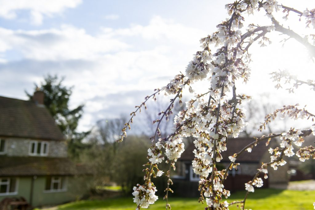 Generic_Spring_Shots
